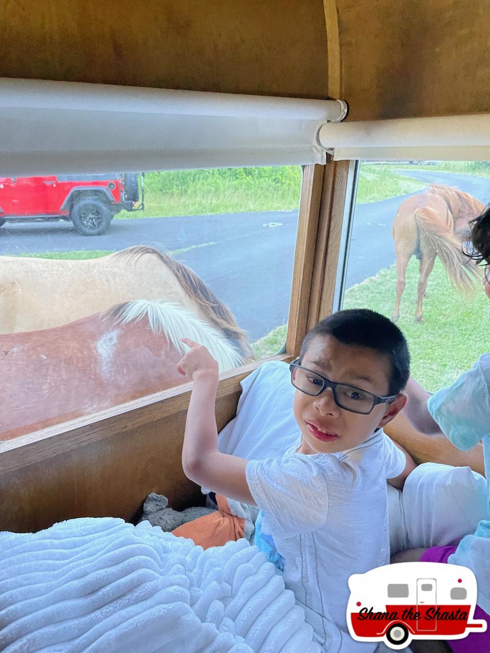 Horse-Observation-from-Vintage-Camper
