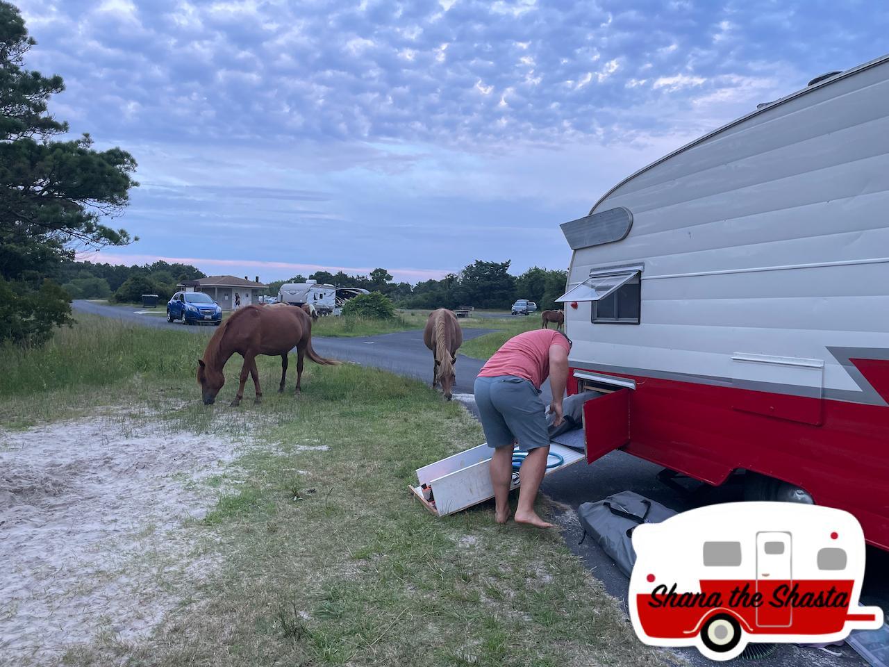 Horses-Around-During-Packup