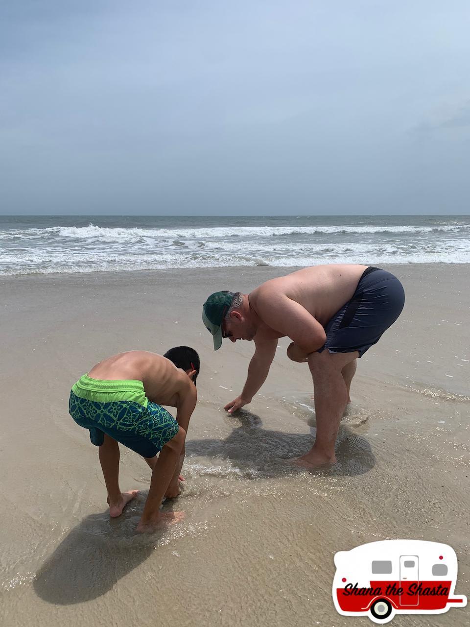 Hunting-Sand-Fiddler-Mole-Crabs