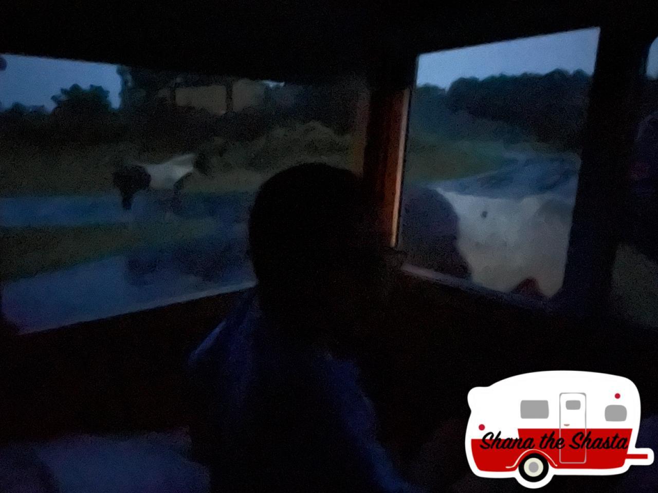 Sleeping-Wild-Horses-Very-Close