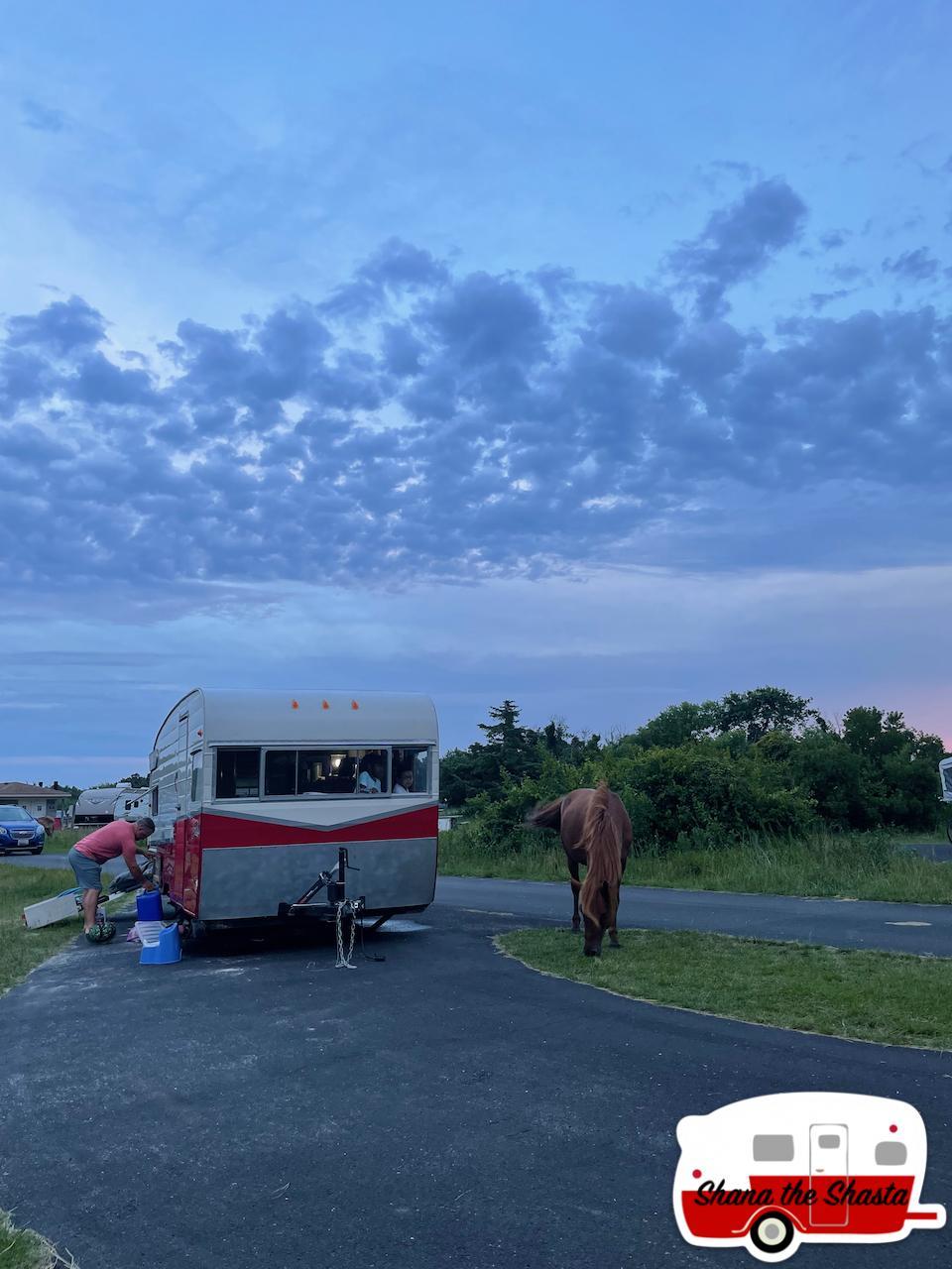 Wild-Horse-Close-to-Campsite