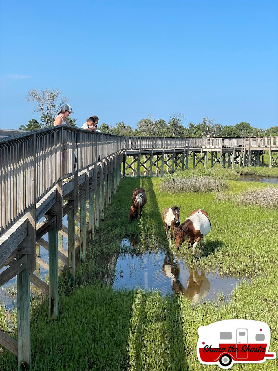 Wild-Horses-in-Marsh