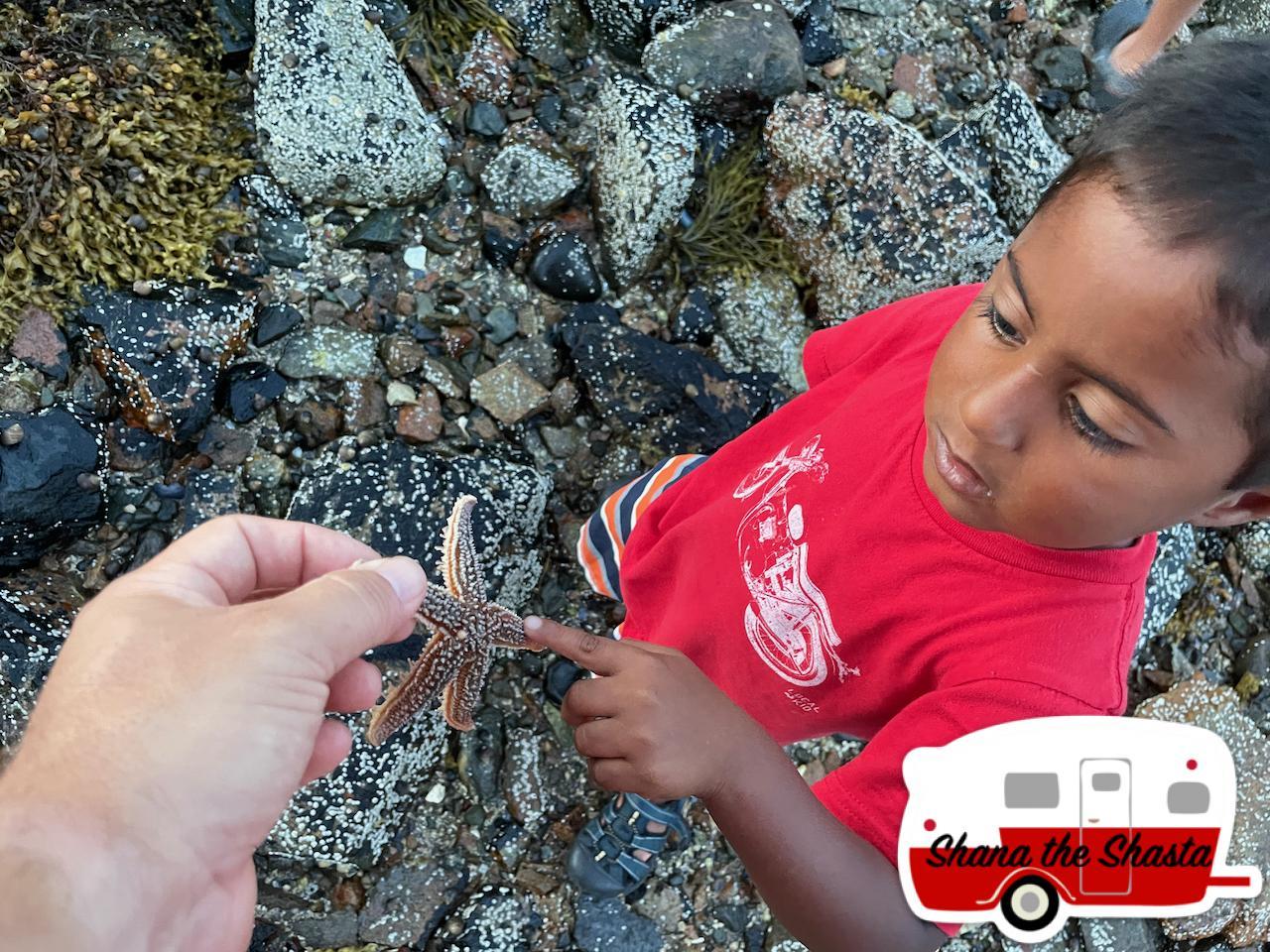 Wild-Starfish-in-Acadia