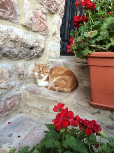 A resident of Assisi.