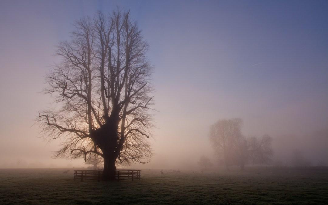 Photo of the Week – Fog in Kilkenny