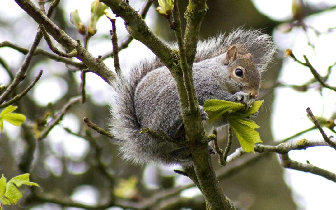 Nibbling Squirrel – 10/Project 52