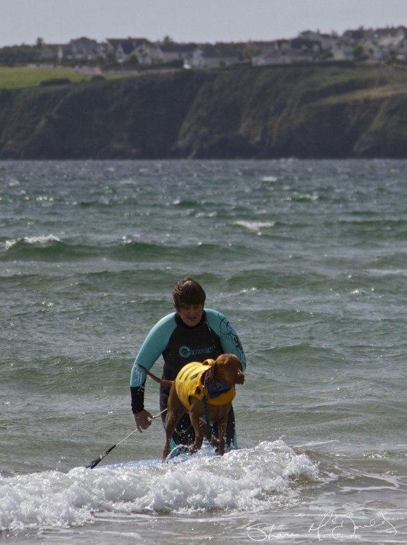 Tramore Dog Surfing - Yes, Dog Surfing! (2/5)