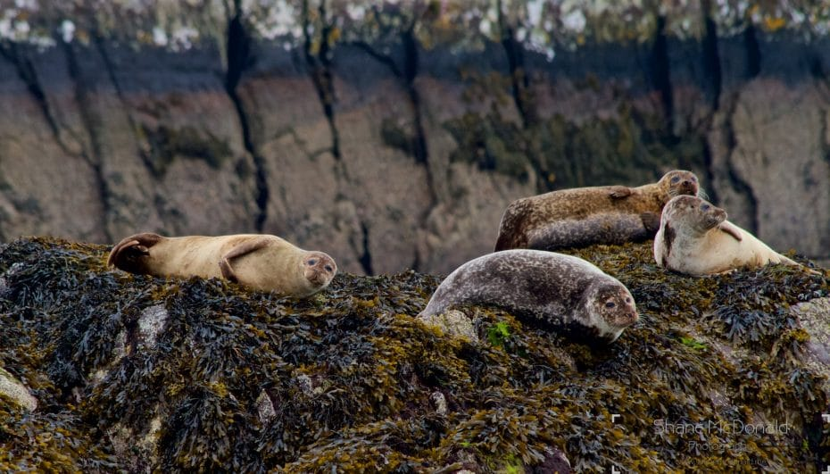 The Seals on Seal Island