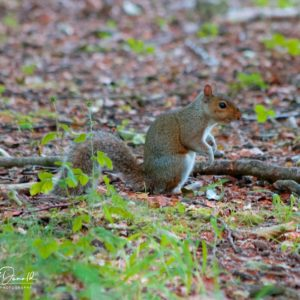 A Squirrel in the New Forest