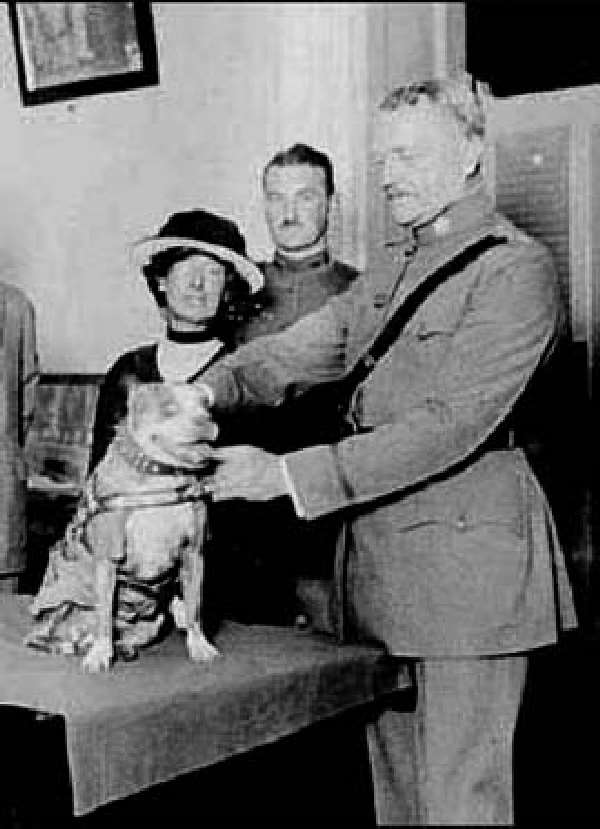 Shangrala's                                                           Sgt. Stubby                          