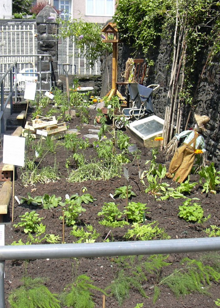 School Grounds - Dig for Victory Garden at a Swansea school.