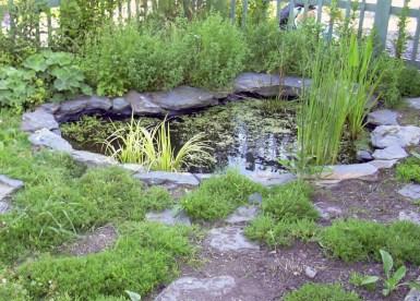 School Grounds - Wildlife pond