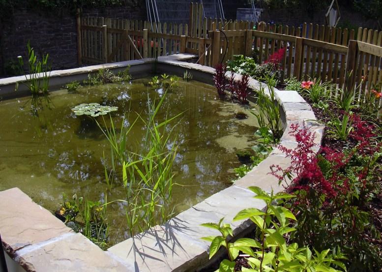 School Grounds - School dipping pond