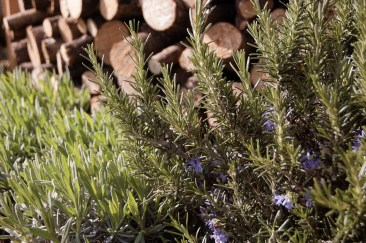 Rosmary and Lavendar growing in front of a pile of neatly stacked logs at the RHS Flower Show Cardiff 2015