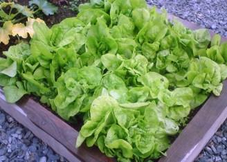 School Grounds - School Vegetable Bed