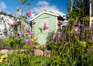 wildlife garden, Bute Park Cardiff, My Wild Garden, Wildlife Trust, green roof