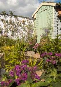 wildlife garden, Bute Park Cardiff, My Wild Garden, Wildlife Trust, pond