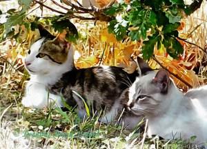 Three Lost Kittens