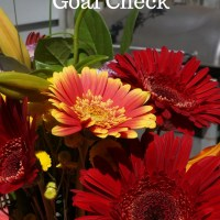 August 2016 Mid-Month Goal Check