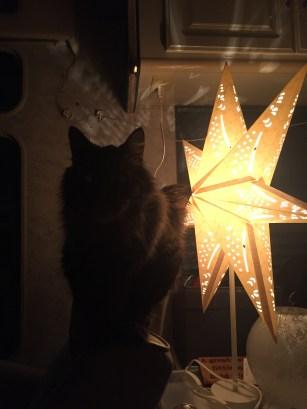 Bob by star light