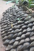 Coconut husks used in gardening for water retention