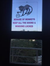 Fuzzy little thieves know how to open the balcony doors