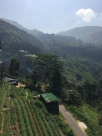 terraced farms and tea fields in the hill country