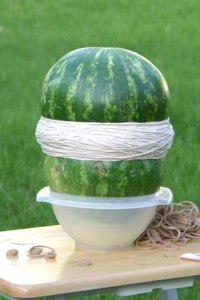 Exploding watermelon and the science behind it