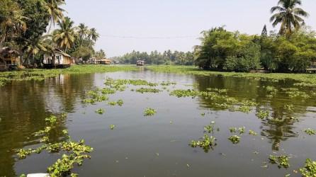 Die Backwaters von Kerala/Indien