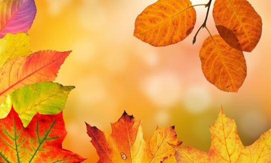 automne mata