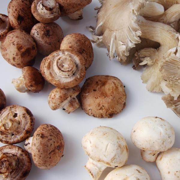 MUSHROOMS deliver cancer-fighting antioxidants