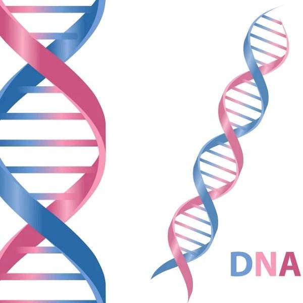 Νέα έρευνα: το DNA ευθύνεται για το αυξημένο βάρος σου