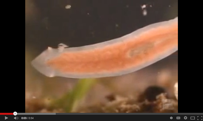 About Flatworms  the Shape of Life  The Story of the