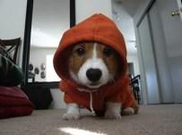 Puppy-03