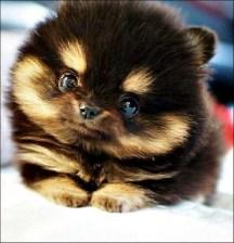 Puppy-25