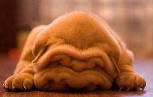 Puppy-31