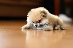 Puppy-42