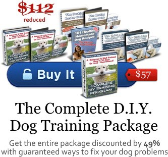 diy dog training