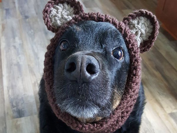 Crochet Doggie Snood Pattern
