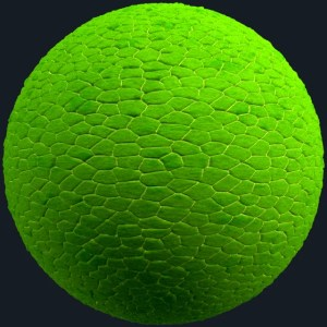 seamless leaf texture green