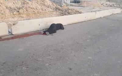 الاحتلال الإسرائيلي يطلق النار على سيدة فلسطينية ويقتلها!