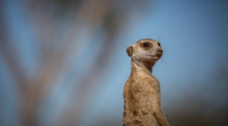 Exploring the Kalahari at Tswalu