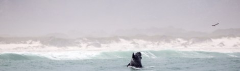 Whale Watching in the Western Cape