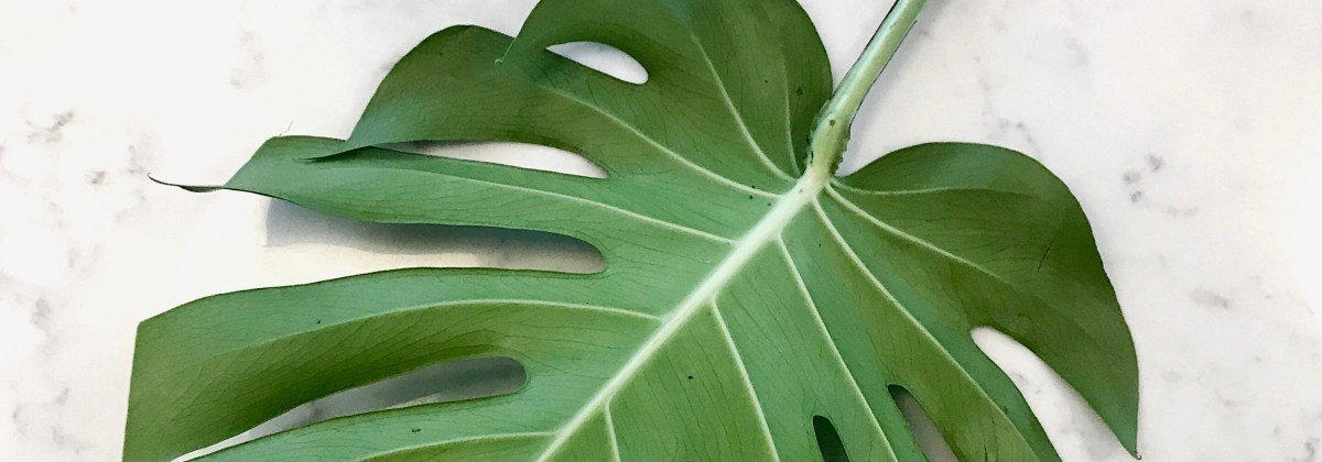 STYLING YOUR HOME: MONSTERA LEAVES