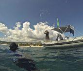 Vigies requins, phase 2 : la vidéosurveillance