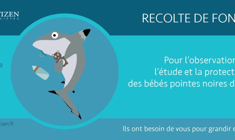 Besoin d'aide pour espionner bébés requins