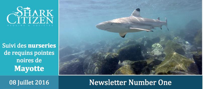 Mayotte – 1ere journée d'espionnage de bébés requins