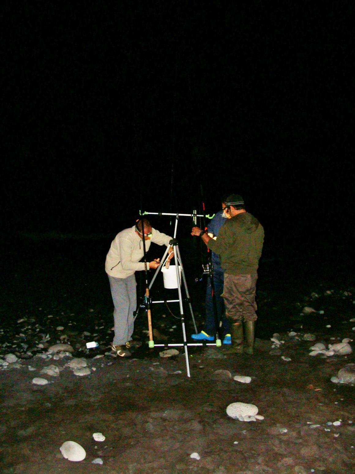 Crise requin, mon expérience d'éco-volontaire à La Réunion