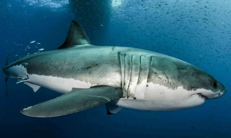 Dates for Shark Week 2019 announced - Sharkophile