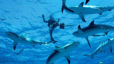 Shark Week Archives - Sharkophile